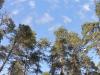 nebo-nad-lesom