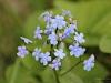 Первомайский цветок